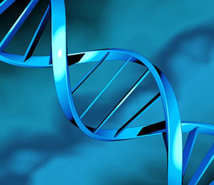 Fertility proteic Hormones